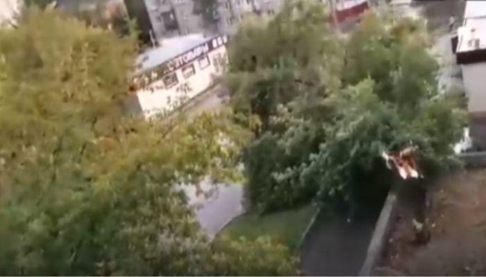 Дерево рухнуло на тротуар после сильного дождя в Барнауле