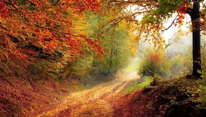Стало известно, когда в Россию придет настоящая осень