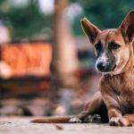 В Заринске женщина натравила собаку на полицейских
