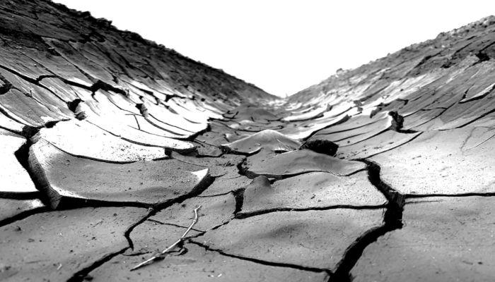 Пострадавшим от засухи алтайским аграриям выделят 300 млн рублей