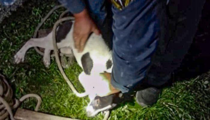 На Алтае спасатели помогли псу выбраться из западни