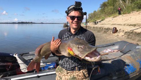 Рыбак выудил у берега Оби гигантскую щуку весом 13 кг