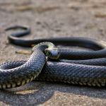 Огромная змея заползла в рот задремавшей россиянке