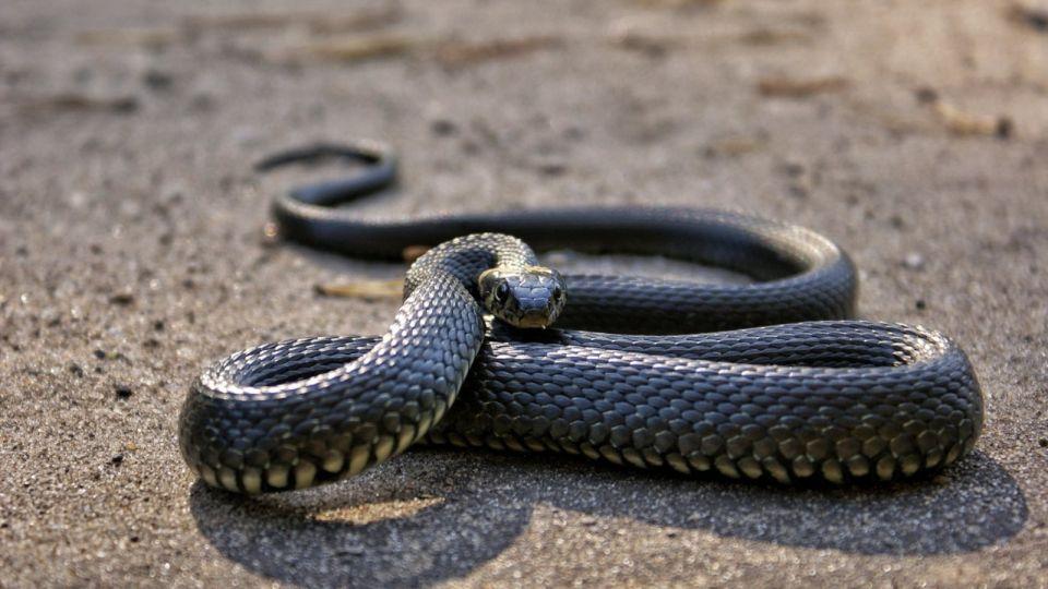 Змея. Животное