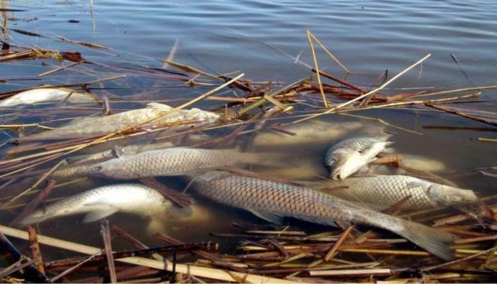 Массовый мор рыбы грозит озерам Бурлинского района - ее слишком много