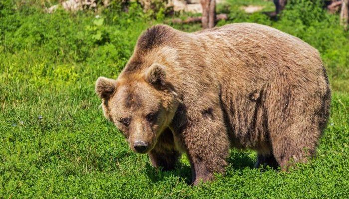 На Алтае медведь решил принять утреннюю ванну в озере