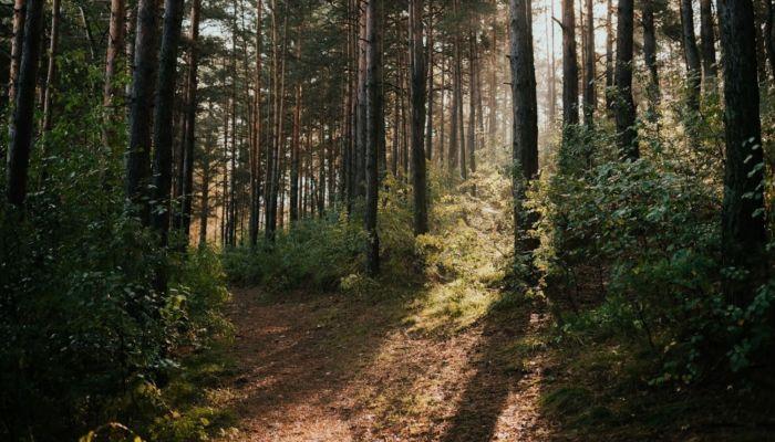Ученые назвали главные причины гибели сибирских лесов