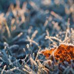 В Алтайском крае объявлен штормпрогноз по заморозкам на 10 сентября