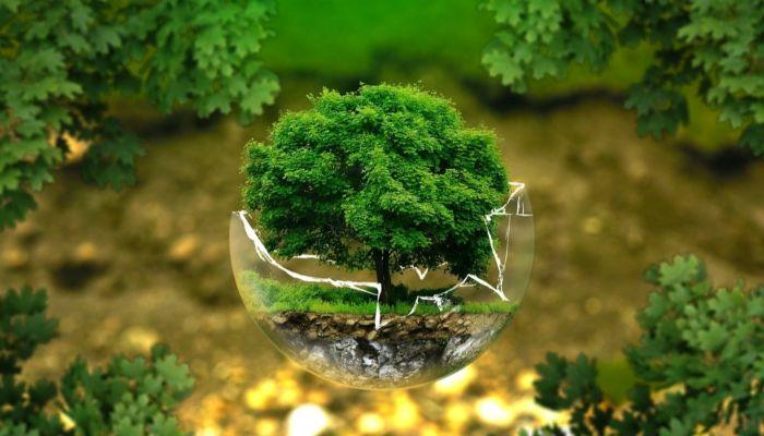 Алтайский край понизился в рейтинге экологически чистых регионов России