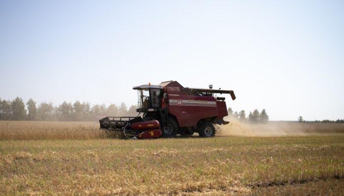 Уборка: одни фермеры бросают поля, другие собирают всё до зернышка из-за цены