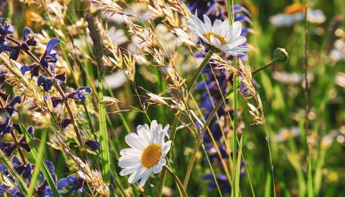 Эксперт назвал эффективные травы в сезон простуд и ОРВИ
