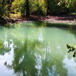 Бирюзовое чудо: в барнаульском дендрарии изменился цвет пруда
