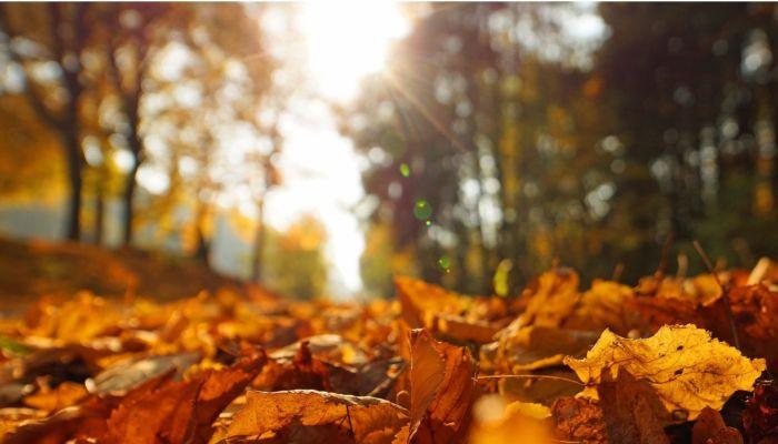 В Алтайском крае 17 сентября теплую погоду сменят дожди и ветер