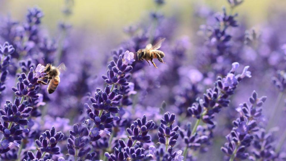 Алтайский сервис для спасения пчел победил на форуме, несмотря на их гибель