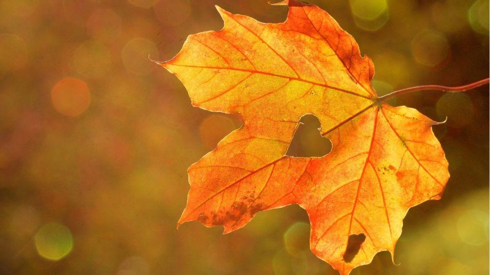 Осень. Листья