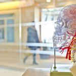 Эксперт перечислил способы, как натренировать память