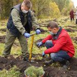 На Алтае собираются высадить 200 тысяч деревьев в этом году