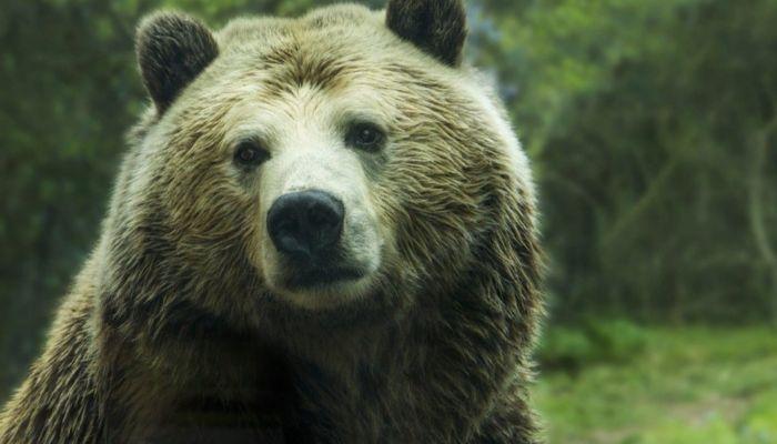 Видео с ловким медведем, сбившим дрон, набирает популярность в Сети
