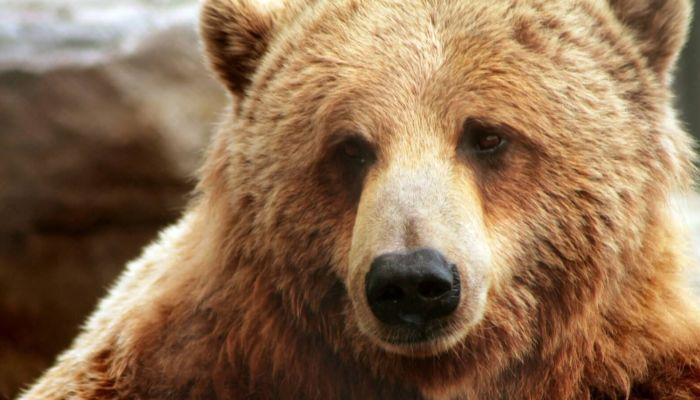 В подмосковном цирке медведь искусал ребёнка и напал на дрессировщика