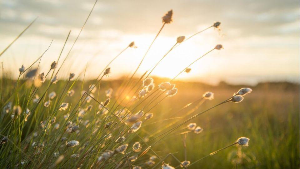 Осень. Природа. Солнце