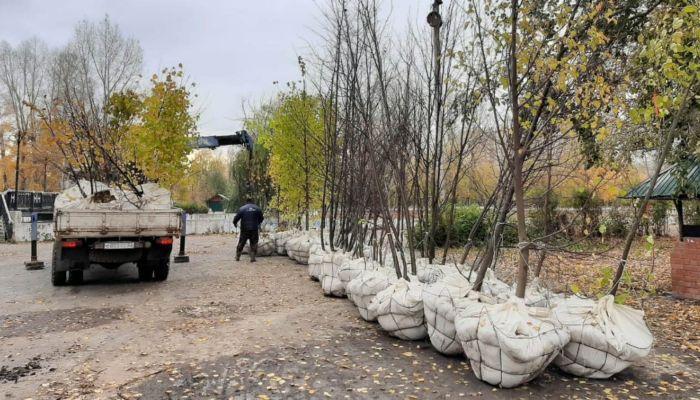 Деревья начали высаживать в барнаульском парке Изумрудный