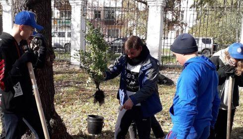 Весь октябрь в парке Изумрудный волонтёры будут высаживать розы и сирень