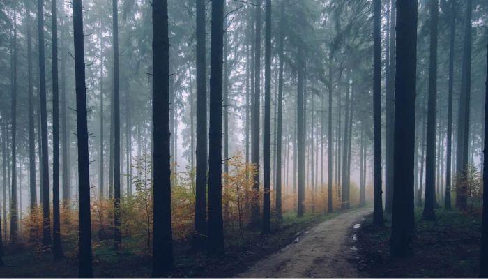 Двое мужчин с ребенком пропали в лесу под Барнаулом