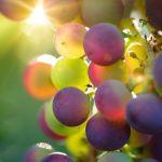 Трясите грозди: эксперты рассказали, как определить качество винограда