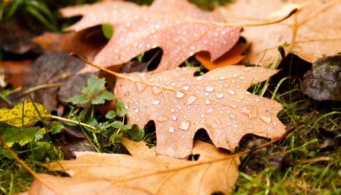 Дожди и до +11 градусов ожидается в Алтайском крае 13 октября