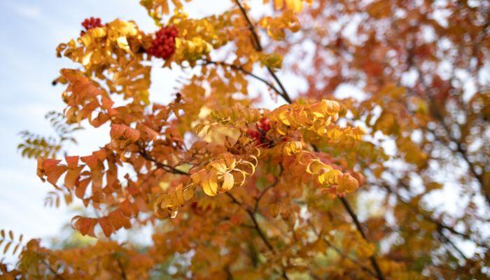Потепление и ветер: какая погода будет 15 октября в Алтайском крае