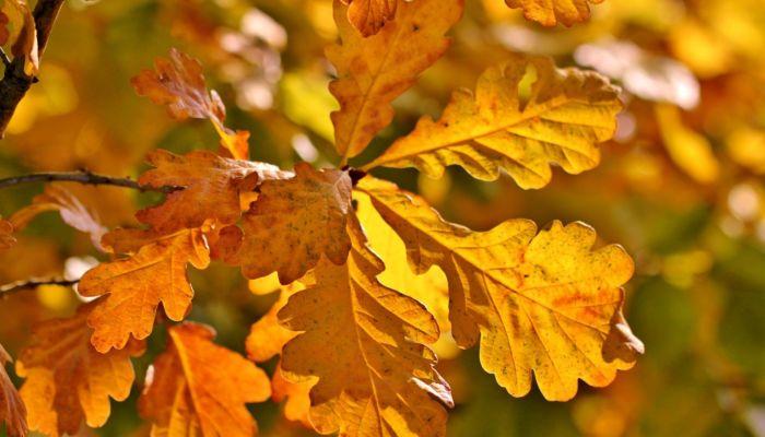 Солнечная и теплая погода до +19 градусов будет 17 октября на Алтае