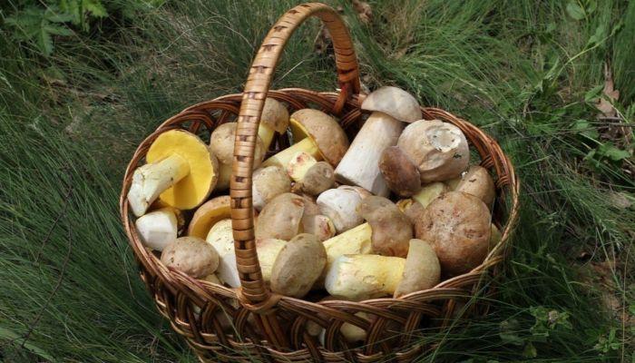 Более 3 тысяч килограммов алтайских грибов отправили в Боснию и Герцеговину