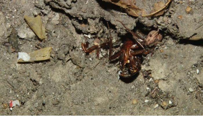 Коммунальный патруль: логово тараканов, аварийные трубы и слив ЖБО в лес