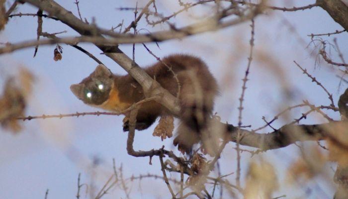 Барнаульцы увидели куницу, сидящую на дереве в парке Юбилейный