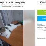 Барнаулец предлагает обменять кошку на двухкомнатную квартиру