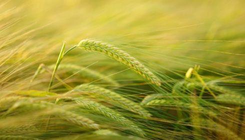 Алтайский край экспортировал агропродукции на 182,8 млн долларов