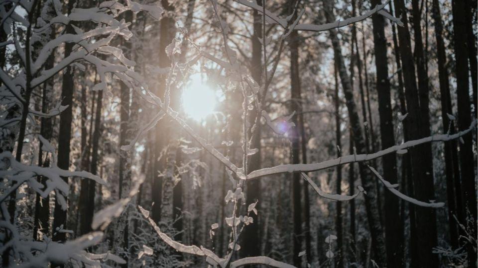 МЧС предупредило о резком похолодании в Алтайском крае