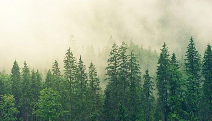 Ученые узнали, когда в Алтайском крае пропал лес