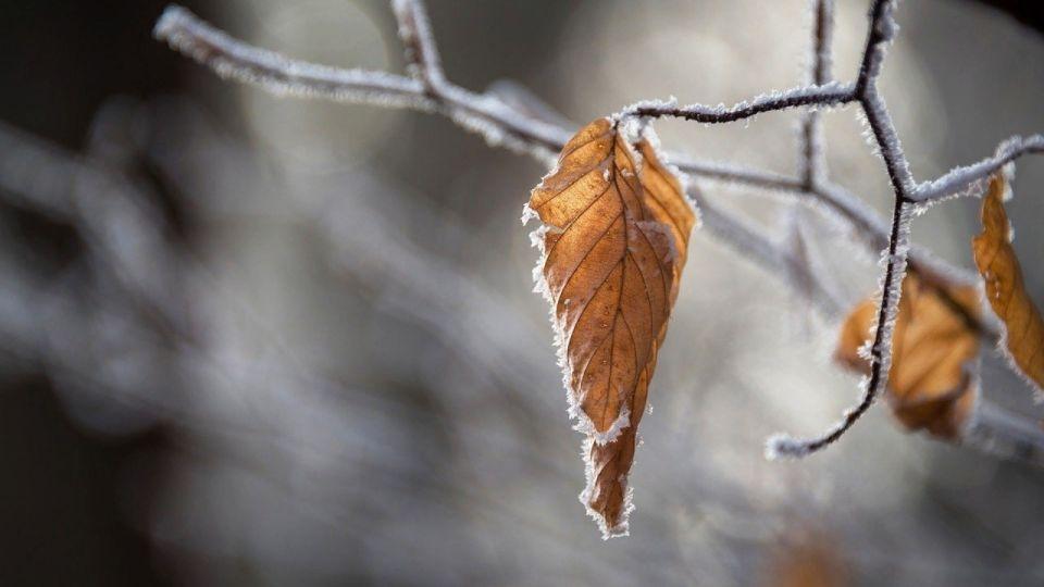 Ветер, снег, дождь: погода резко ухудшится в Алтайском крае