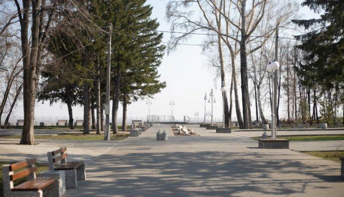 В Нагорном парке высадили 50 ив и 35 корней девичьего винограда