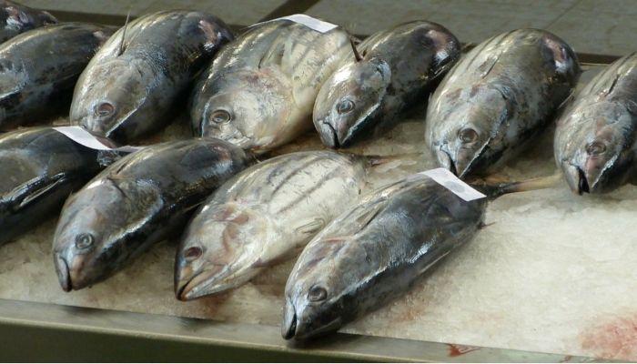В Алтайский край пытались провезти 40 тонн опасной рыбы
