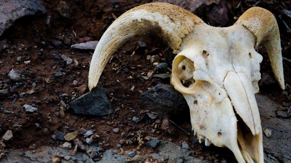 В Алтайском крае выявили более сотни нарушений при обустройстве скотомогильников