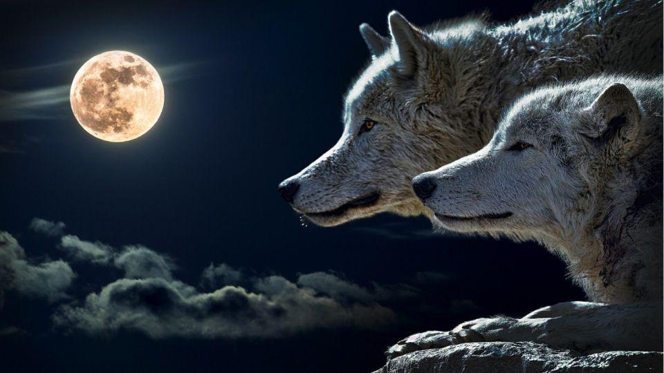 Народные приметы 2 ноября. Почему рожденных в этот день защищает мать-волчица