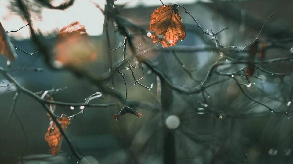 До +8, но ветрено: синоптики рассказали о погоде в Алтайском крае 2 ноября