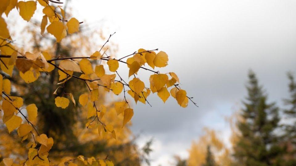 Шквалистый ветер и +15: синоптики рассказали о погоде в Алтайском крае 8 ноября
