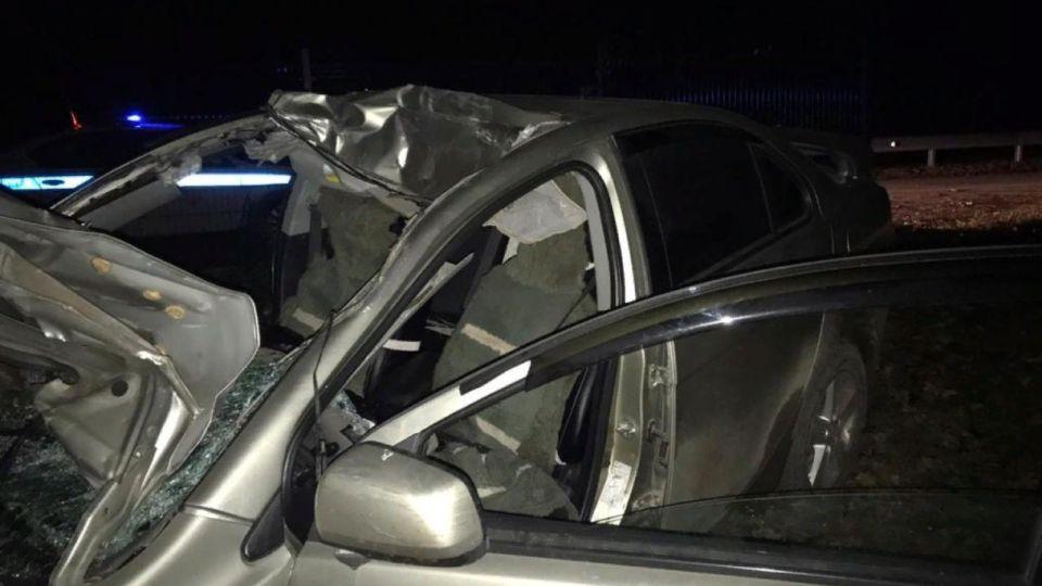 Два человека попали в реанимацию после ДТП с лошадью на Алтае