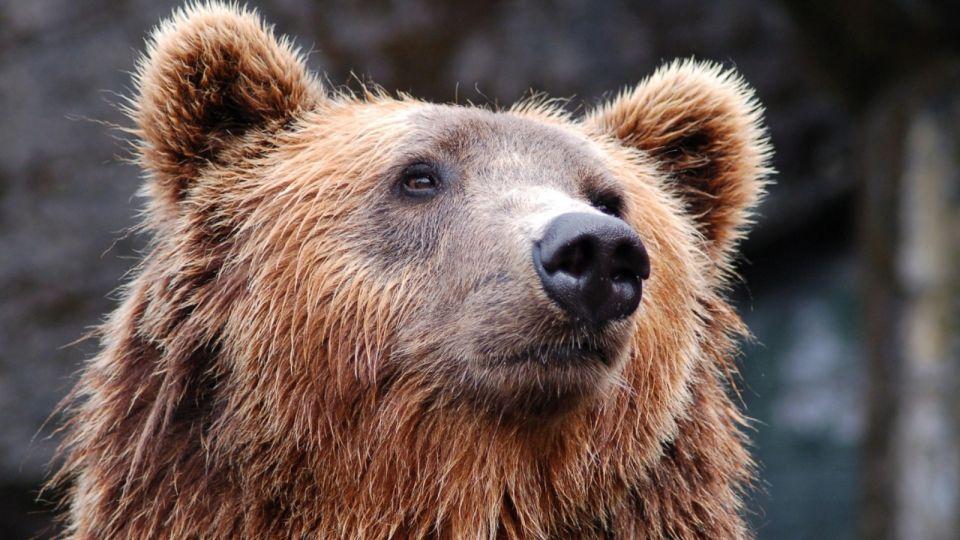 Народные приметы 11 ноября. Что делает медведь и к чему рыскают волки