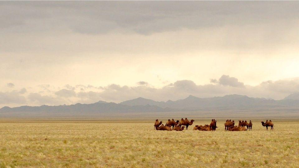 Из-за ковида Монголия закрыла границу с Республикой Алтай