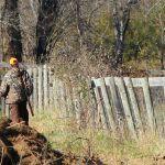 Браконьеры подкинули трупы лосей новому егерю Обского заказника
