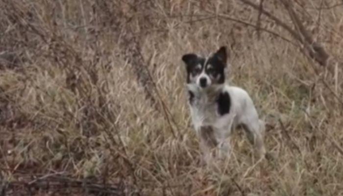 Бесконечный лай: под окнами жителей Новоалтайска организовали приют для собак